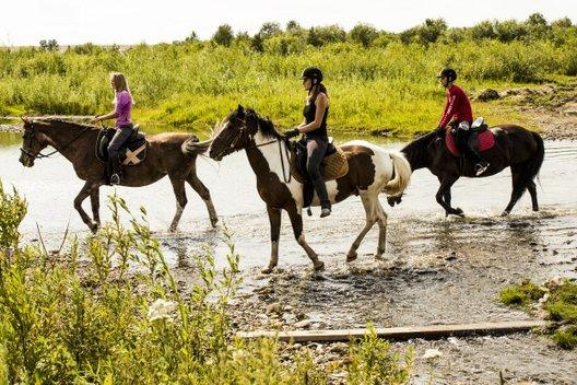 8 мест для конных прогулок в Красноярске