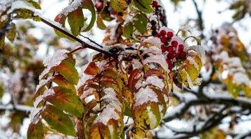 Синоптики пообещали красноярцам первый снег и сильный ветер