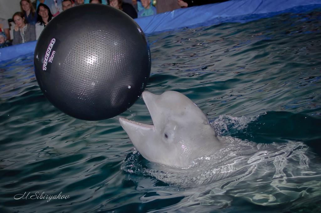 дельфинарий в рязани фото конструкторы