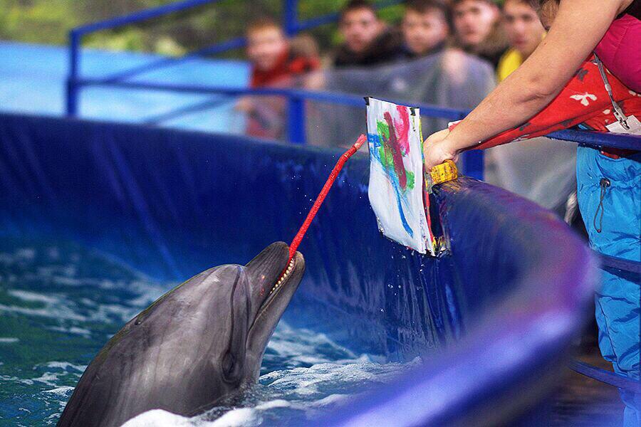 днях телеведущая фото из дельфинария красноярск мужчины женщины рожденные
